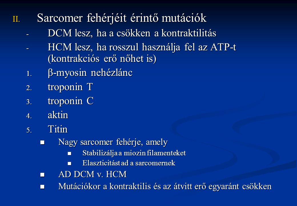 III.Nuclearis membrán fehérjék 1.Emerin X-hez kötött Emery-Dreifuss muscularis dystrophia DCM és vezetési zavarok A harántcsíkolt izomzat nem feltétlenül érintett 2.Lamin A és C AD Dimert alkotnak A maghártya belső felszínén helyezkedik el és a kromatinhoz kapcsolódik Emery-Dreifuss betegség, de vázizomzat soha nem érintett IV.Gap junction fehérjéi 1.Metavinculin α-aktinin-el kapcsolódikα-aktinin-el kapcsolódik A citoszkeletont a sejtmembránhoz kapcsolja a junkcióban (sejtek összekapcsolása)A citoszkeletont a sejtmembránhoz kapcsolja a junkcióban (sejtek összekapcsolása)
