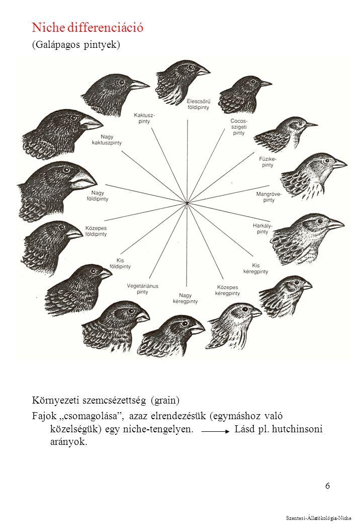 """6 Niche differenciáció (Galápagos pintyek) Környezeti szemcsézettség (grain) Fajok """"csomagolása , azaz elrendezésük (egymáshoz való közelségük) egy niche-tengelyen."""