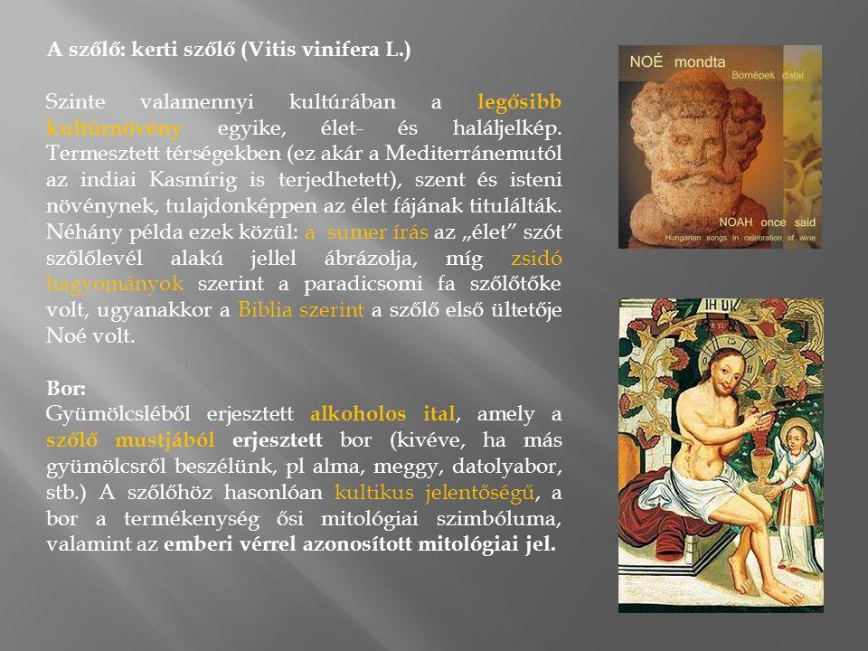 A szőlő: kerti szőlő (Vitis vinifera L.) Szinte valamennyi kultúrában a legősibb kultúrnövény egyike, élet- és haláljelkép.