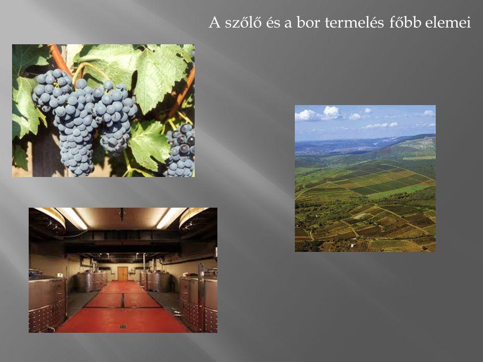 A szőlő és a bor termelés főbb elemei