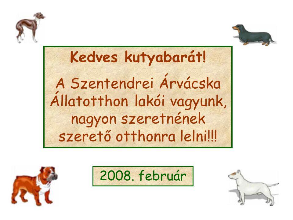 Kedves kutyabarát! A Szentendrei Árvácska Állatotthon lakói vagyunk, nagyon szeretnének szerető otthonra lelni!!! 2008. február