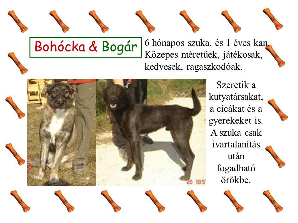 Bohócka & Bogár Szeretik a kutyatársakat, a cicákat és a gyerekeket is. A szuka csak ivartalanítás után fogadható örökbe. 6 hónapos szuka, és 1 éves k