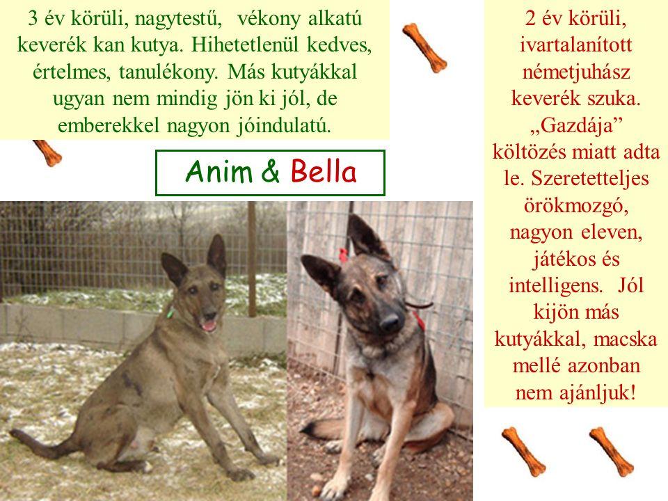 Anim & Bella 3 év körüli, nagytestű, vékony alkatú keverék kan kutya. Hihetetlenül kedves, értelmes, tanulékony. Más kutyákkal ugyan nem mindig jön ki