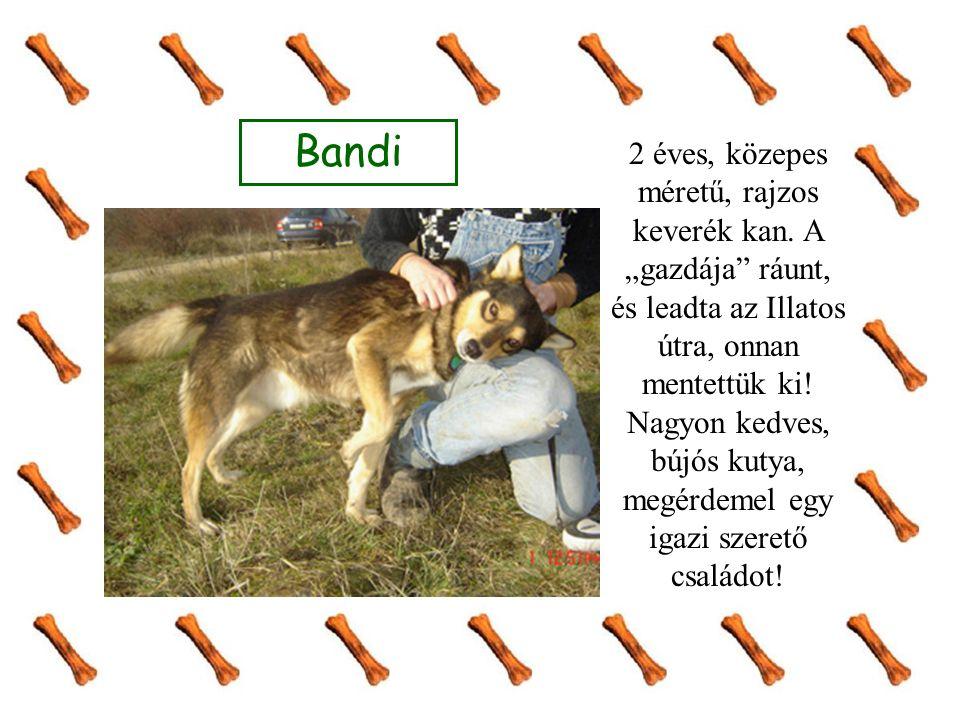 """Bandi 2 éves, közepes méretű, rajzos keverék kan. A """"gazdája"""" ráunt, és leadta az Illatos útra, onnan mentettük ki! Nagyon kedves, bújós kutya, megérd"""