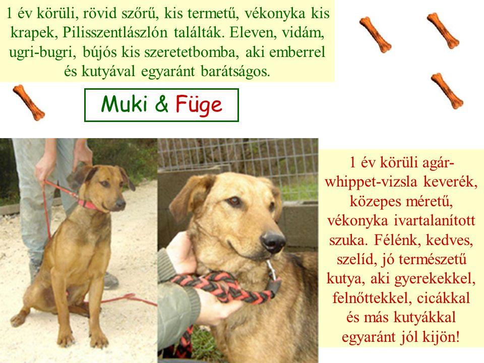 Muki & Füge 1 év körüli, rövid szőrű, kis termetű, vékonyka kis krapek, Pilisszentlászlón találták. Eleven, vidám, ugri-bugri, bújós kis szeretetbomba