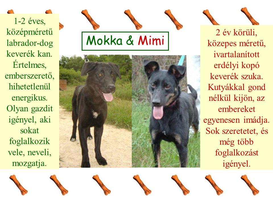 Mokka & Mimi 1-2 éves, középméretű labrador-dog keverék kan. Értelmes, emberszerető, hihetetlenül energikus. Olyan gazdit igényel, aki sokat foglalkoz