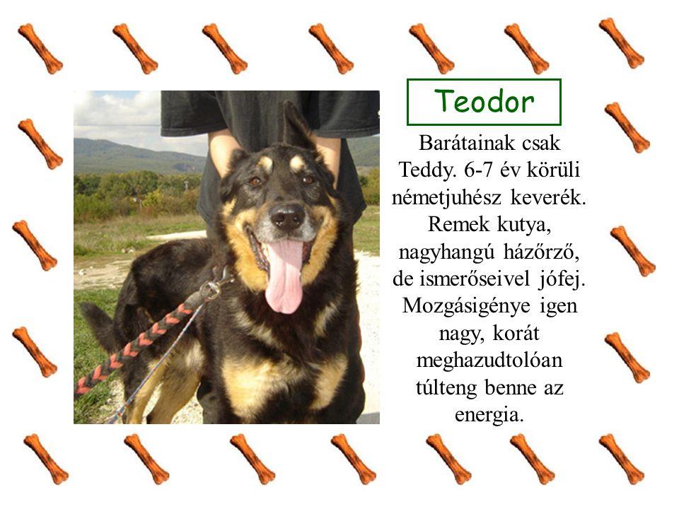 Teodor Barátainak csak Teddy. 6-7 év körüli németjuhész keverék. Remek kutya, nagyhangú házőrző, de ismerőseivel jófej. Mozgásigénye igen nagy, korát