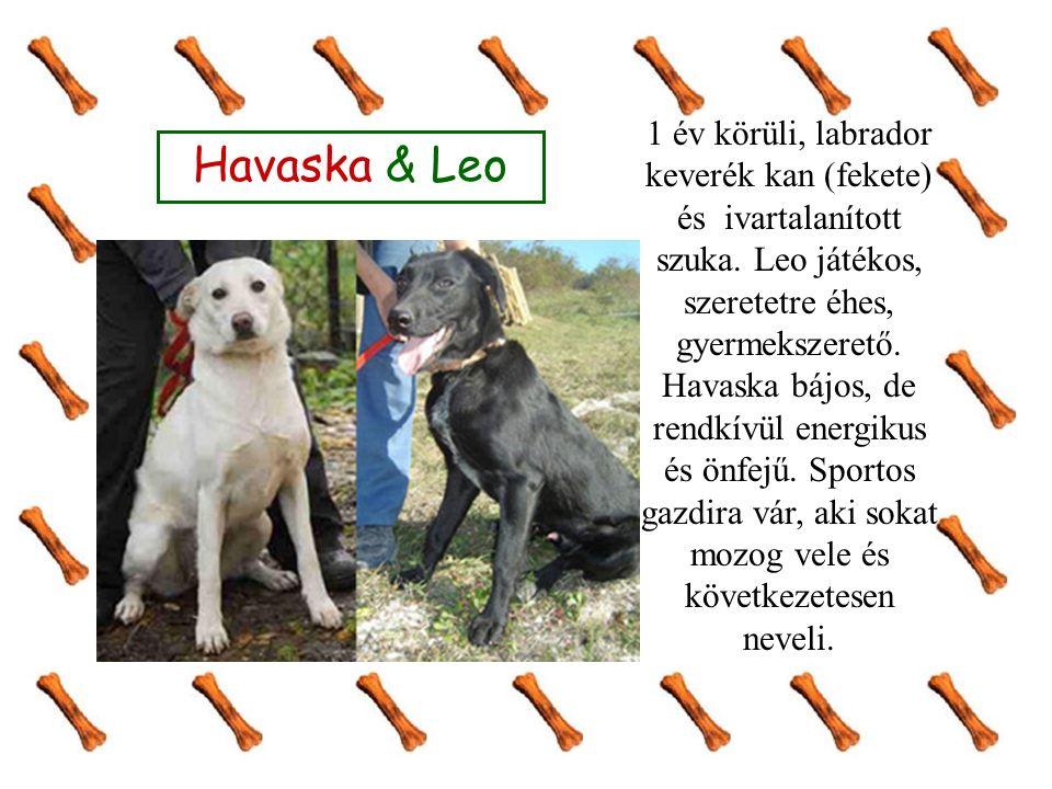 Havaska & Leo 1 év körüli, labrador keverék kan (fekete) és ivartalanított szuka. Leo játékos, szeretetre éhes, gyermekszerető. Havaska bájos, de rend
