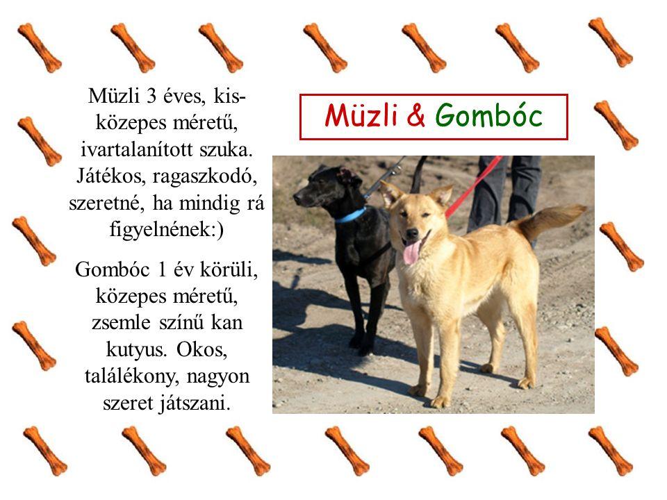 Müzli & Gombóc Müzli 3 éves, kis- közepes méretű, ivartalanított szuka.