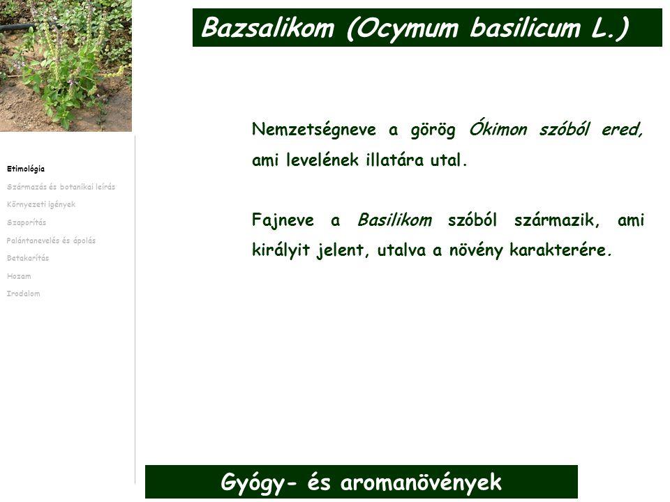 Nemzetségneve a görög Ókimon szóból ered, ami levelének illatára utal.