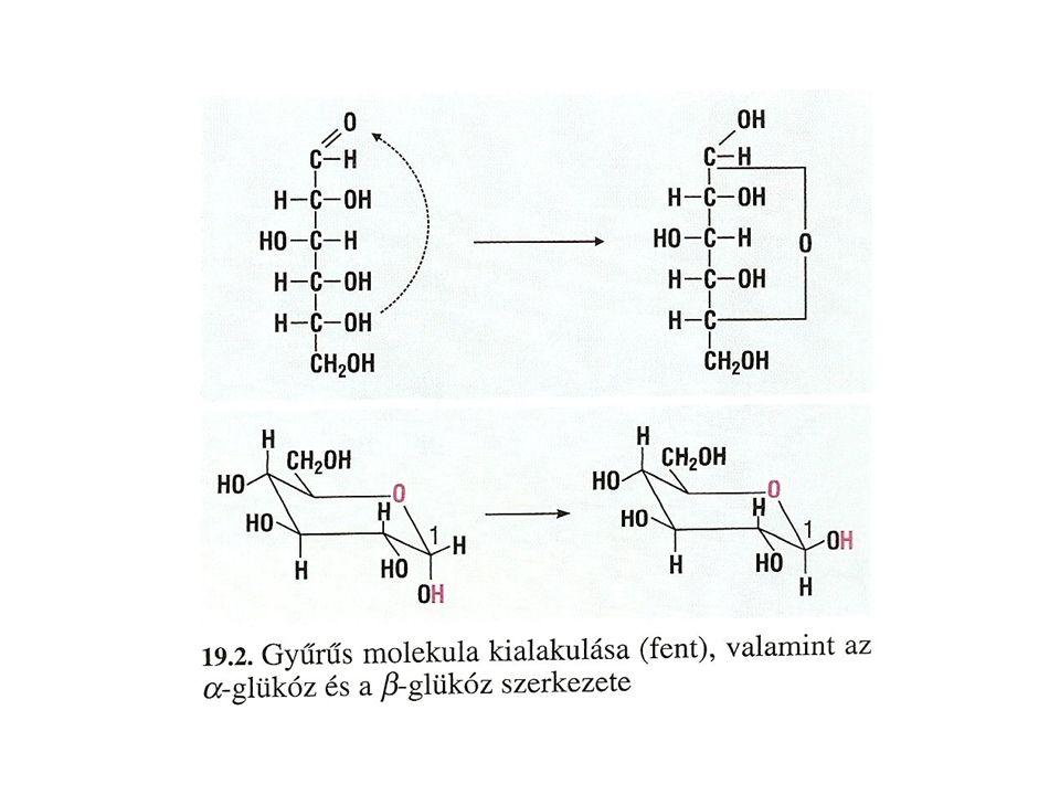 - érdekes, hogy a természetben csak D-változat fordul elő - vizes cukoroldatban tehát egyensúly alakul ki, 63% β-D glükózt, 37 %-ban α-D-glükózt és igen kis mértékben nyílt láncú D-glükózt tartalmaz.
