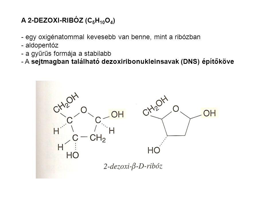 A 2-DEZOXI-RIBÓZ (C 5 H 10 O 4 ) - egy oxigénatommal kevesebb van benne, mint a ribózban - aldopentóz - a gyűrűs formája a stabilabb - A sejtmagban ta