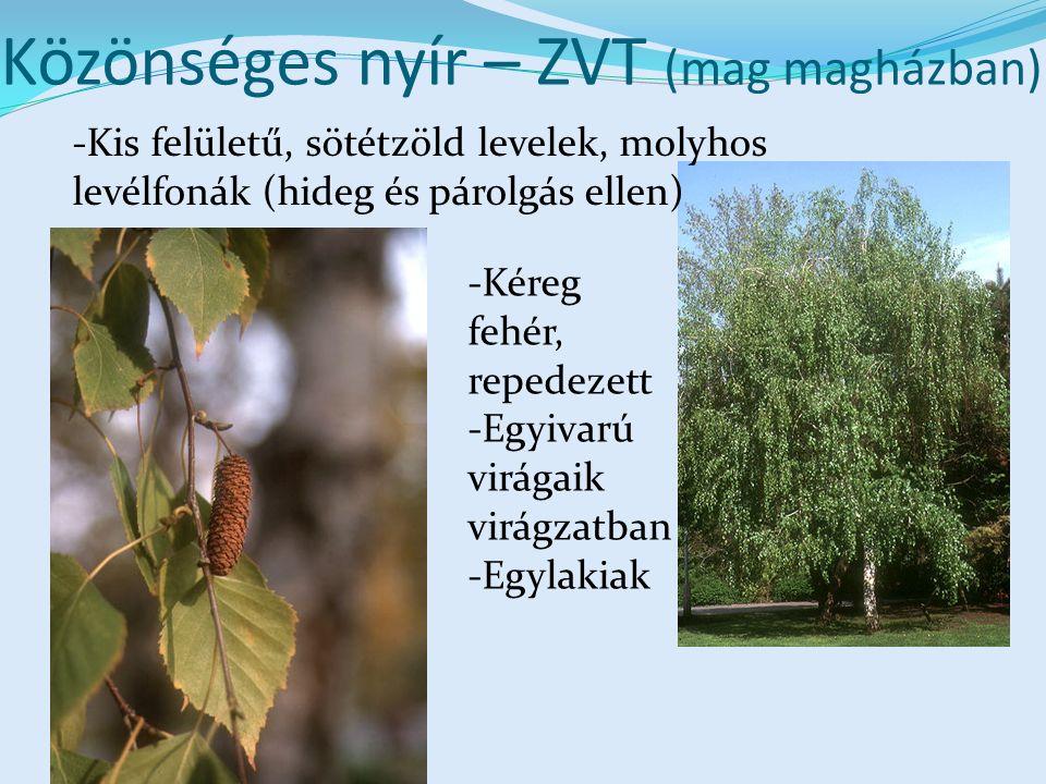 Közönséges nyír – ZVT (mag magházban) -Kis felületű, sötétzöld levelek, molyhos levélfonák (hideg és párolgás ellen) -Kéreg fehér, repedezett -Egyivarú virágaik virágzatban -Egylakiak