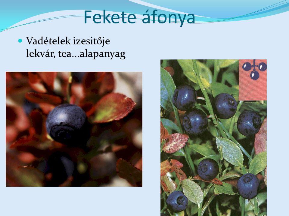 Fekete áfonya Vadételek izesitője lekvár, tea...alapanyag