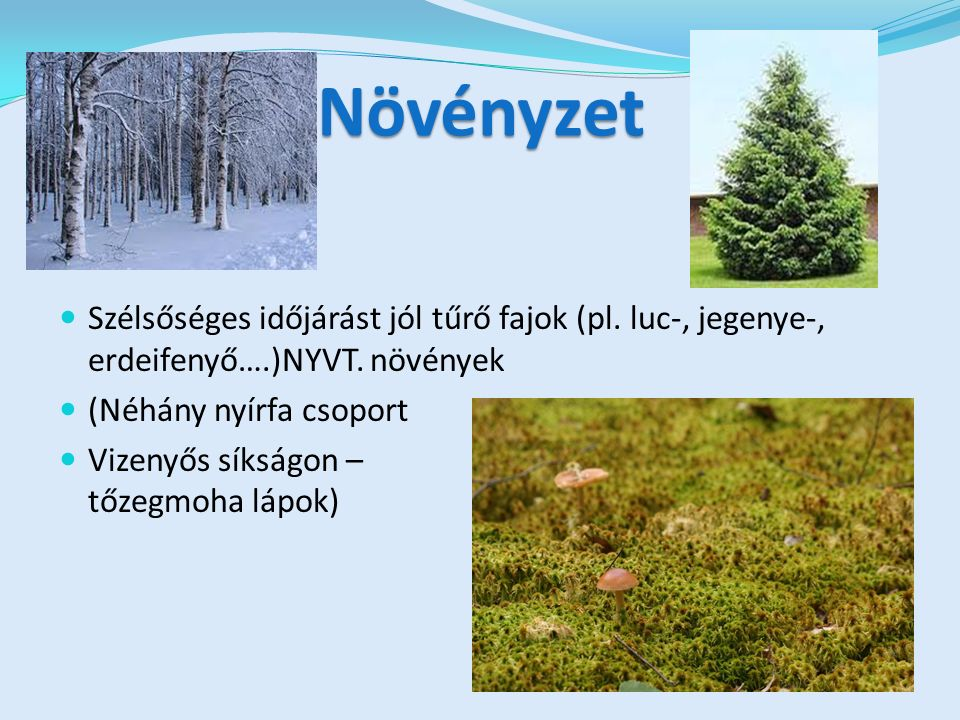 Növényzet Szélsőséges időjárást jól tűrő fajok (pl.