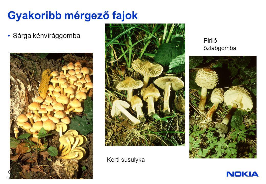 Company Confidential © 2008 Nokia V1-Filename.ppt / YYYY-MM-DD / Initials 11 Gyakoribb mérgező fajok Sárga kénvirággomba Kerti susulyka Piriló őzlábgomba