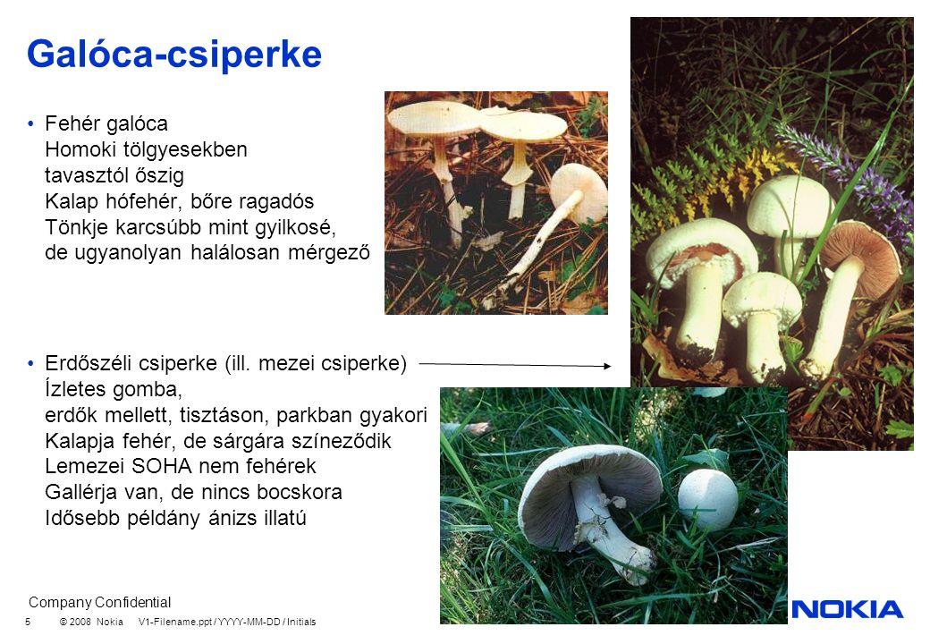 Company Confidential © 2008 Nokia V1-Filename.ppt / YYYY-MM-DD / Initials 5 Galóca-csiperke Fehér galóca Homoki tölgyesekben tavasztól őszig Kalap hófehér, bőre ragadós Tönkje karcsúbb mint gyilkosé, de ugyanolyan halálosan mérgező Erdőszéli csiperke (ill.