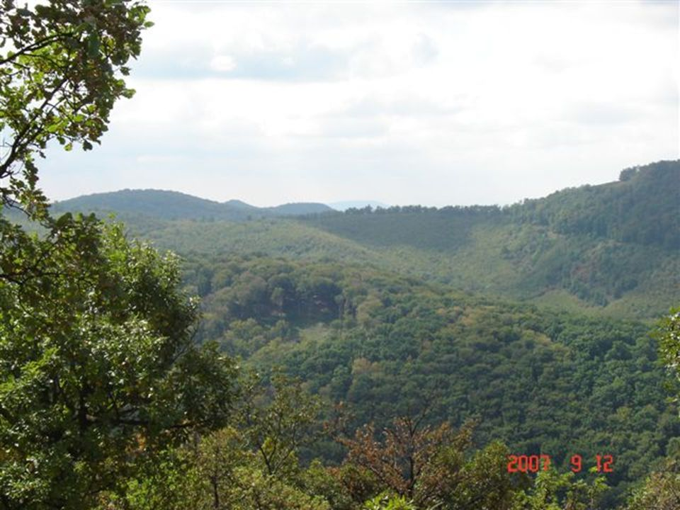 Az erdő versek Készítette: G.M. 2007.okt.14 Budapestről egy jó órai autóúttal Nagybörzsönybe érsz.