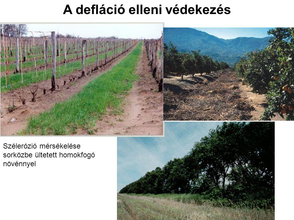A defláció elleni védekezés Szélerózió mérsékelése sorközbe ültetett homokfogó növénnyel