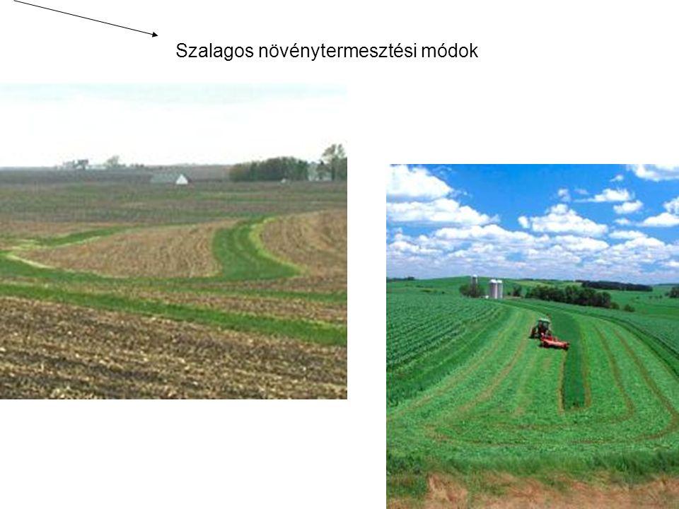 A szikes talajok javítása A szikjavítás feltétele: a talaj sókészletének csökkentése (a drénviszonyok javításával), továbbá olyan körülmények kialakítása, amelynek hatására megnő a talajoldat kalciumion koncentrációja.