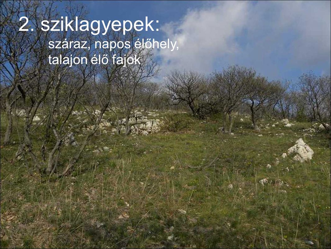 2. sziklagyepek: száraz, napos élőhely, talajon élő fajok