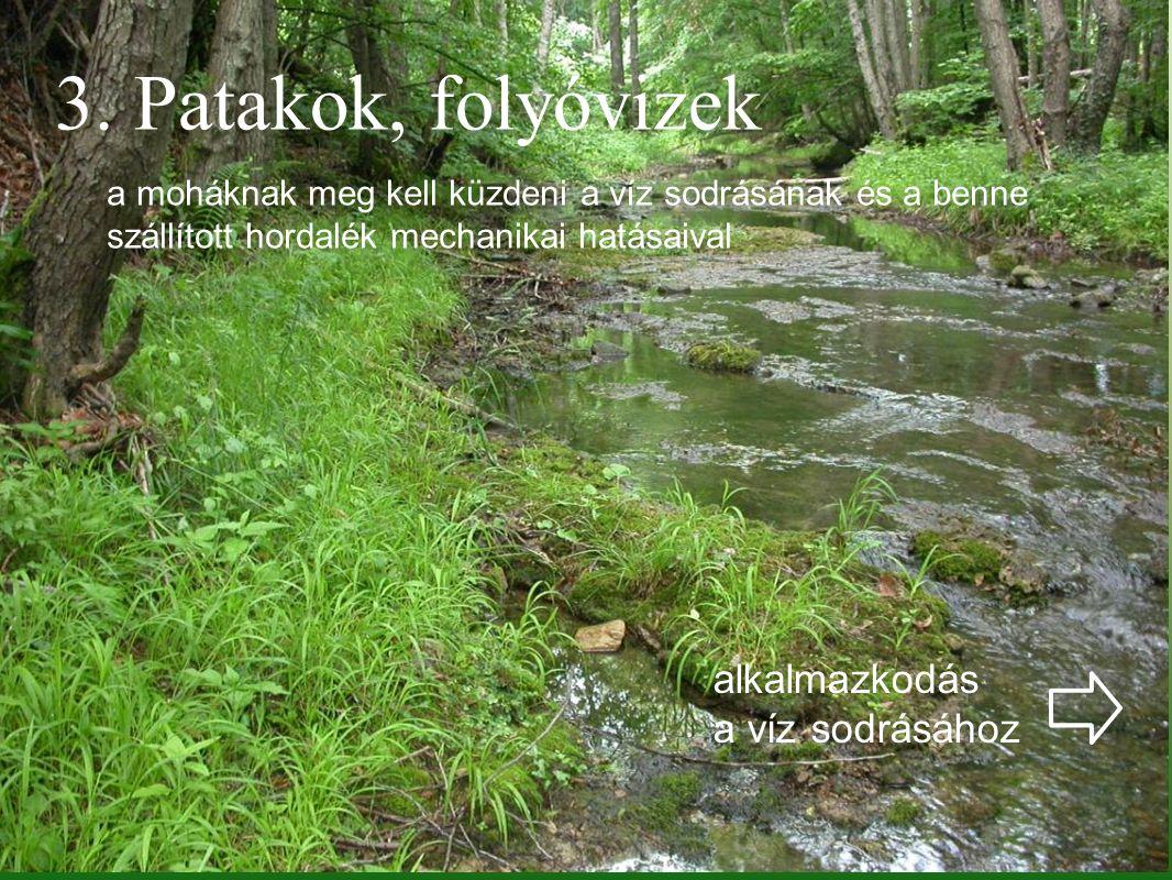 3. Patakok, folyóvizek a moháknak meg kell küzdeni a víz sodrásának és a benne szállított hordalék mechanikai hatásaival alkalmazkodás a víz sodrásáho