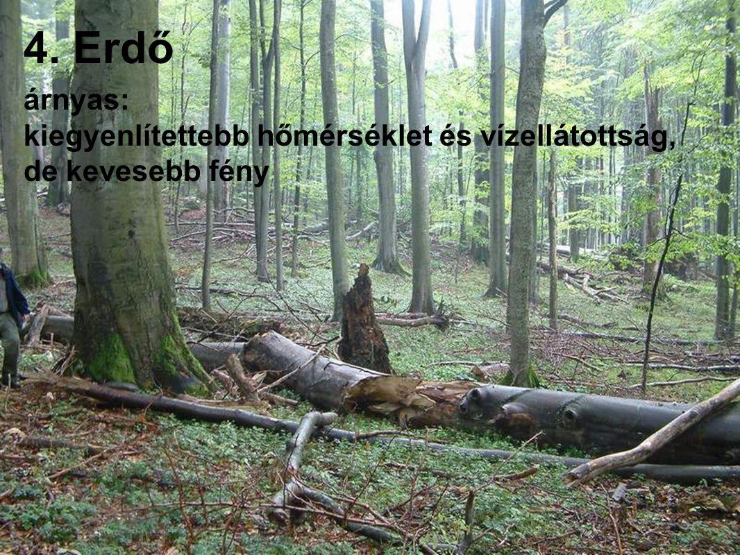 4. Erdő árnyas: kiegyenlítettebb hőmérséklet és vízellátottság, de kevesebb fény