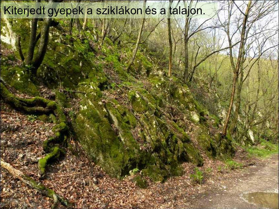 Kiterjedt gyepek a sziklákon és a talajon.