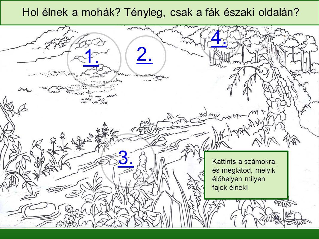 1. 2. 3. 4. Kattints a számokra, és meglátod, melyik élőhelyen milyen fajok élnek.