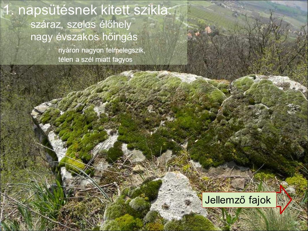 1. napsütésnek kitett szikla: száraz, szeles élőhely nagy évszakos hőingás nyáron nagyon felmelegszik, télen a szél miatt fagyos Jellemző fajok
