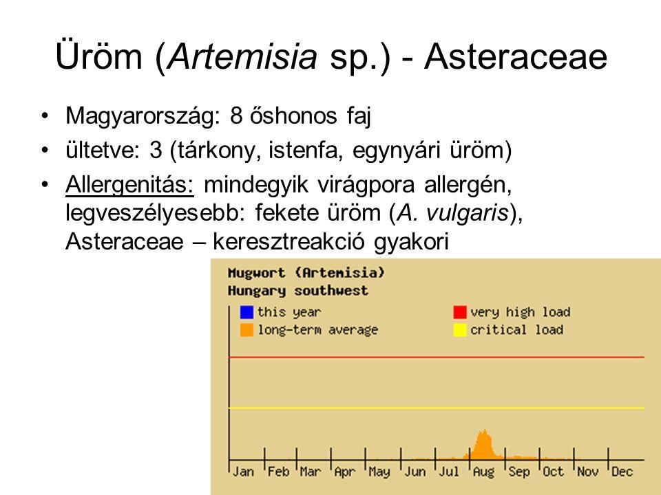 Üröm (Artemisia sp.) - Asteraceae Magyarország: 8 őshonos faj ültetve: 3 (tárkony, istenfa, egynyári üröm) Allergenitás: mindegyik virágpora allergén, legveszélyesebb: fekete üröm (A.