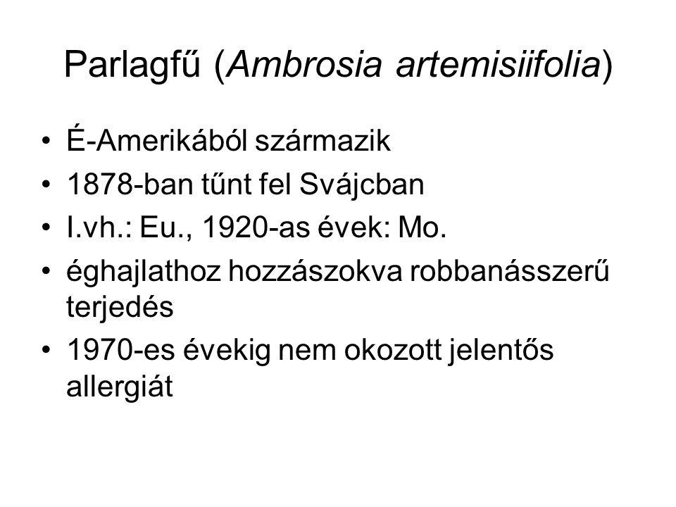 Parlagfű (Ambrosia artemisiifolia) É-Amerikából származik 1878-ban tűnt fel Svájcban I.vh.: Eu., 1920-as évek: Mo.