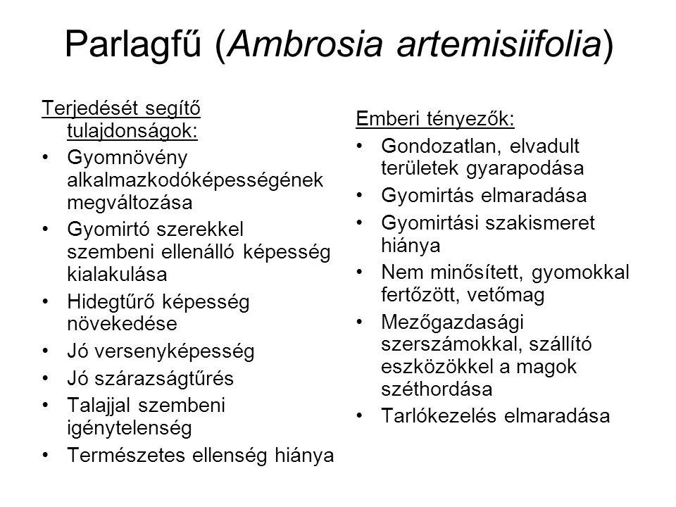 Parlagfű (Ambrosia artemisiifolia) Terjedését segítő tulajdonságok: Gyomnövény alkalmazkodóképességének megváltozása Gyomirtó szerekkel szembeni ellenálló képesség kialakulása Hidegtűrő képesség növekedése Jó versenyképesség Jó szárazságtűrés Talajjal szembeni igénytelenség Természetes ellenség hiánya Emberi tényezők: Gondozatlan, elvadult területek gyarapodása Gyomirtás elmaradása Gyomirtási szakismeret hiánya Nem minősített, gyomokkal fertőzött, vetőmag Mezőgazdasági szerszámokkal, szállító eszközökkel a magok széthordása Tarlókezelés elmaradása