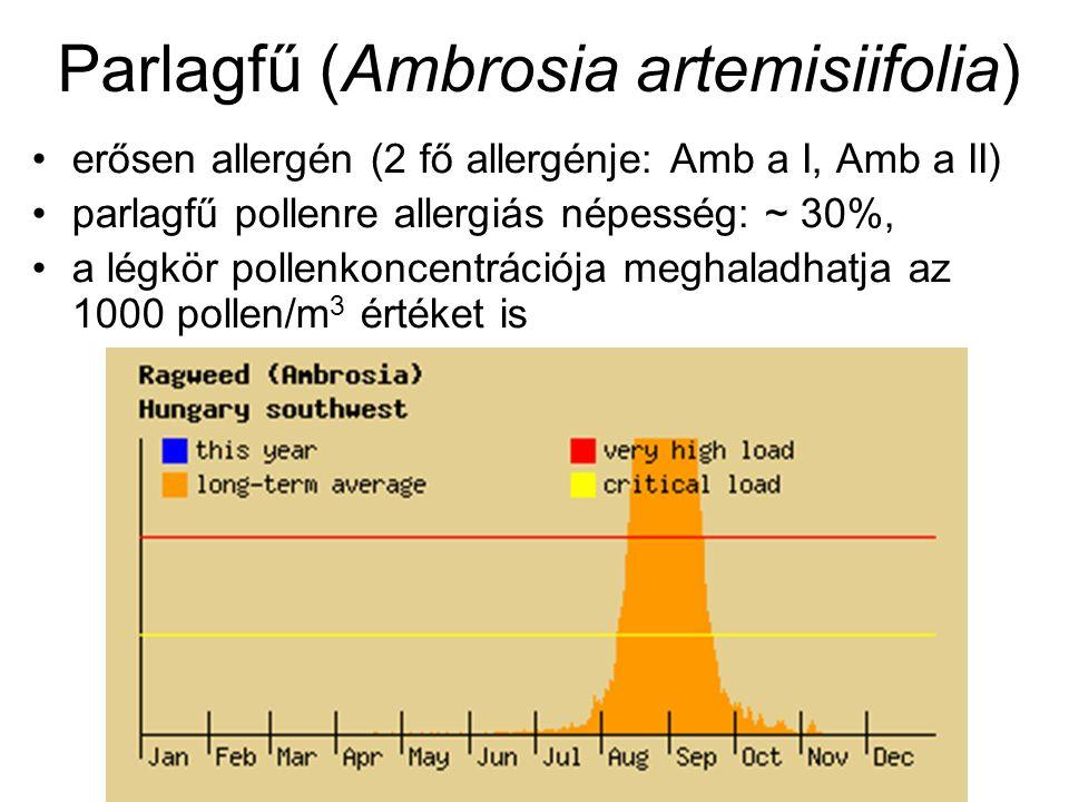 Parlagfű (Ambrosia artemisiifolia) erősen allergén (2 fő allergénje: Amb a I, Amb a II) parlagfű pollenre allergiás népesség: ~ 30%, a légkör pollenkoncentrációja meghaladhatja az 1000 pollen/m 3 értéket is