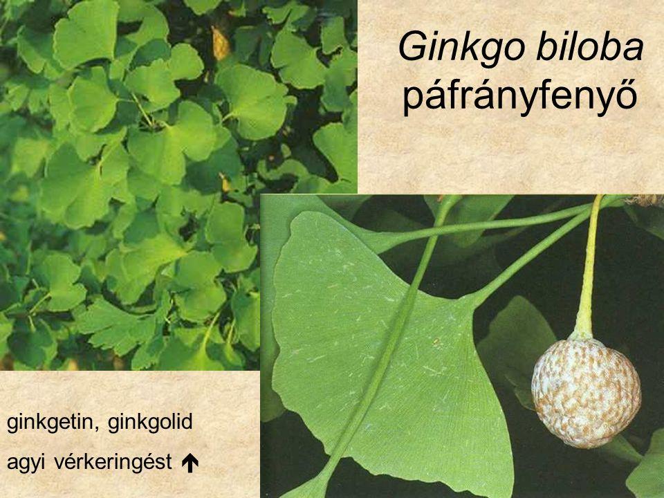 Classis: CONIFEROPSIDA Ordo: Coniferales (Pinales) Familia: Araucariaceae Araukariafélék