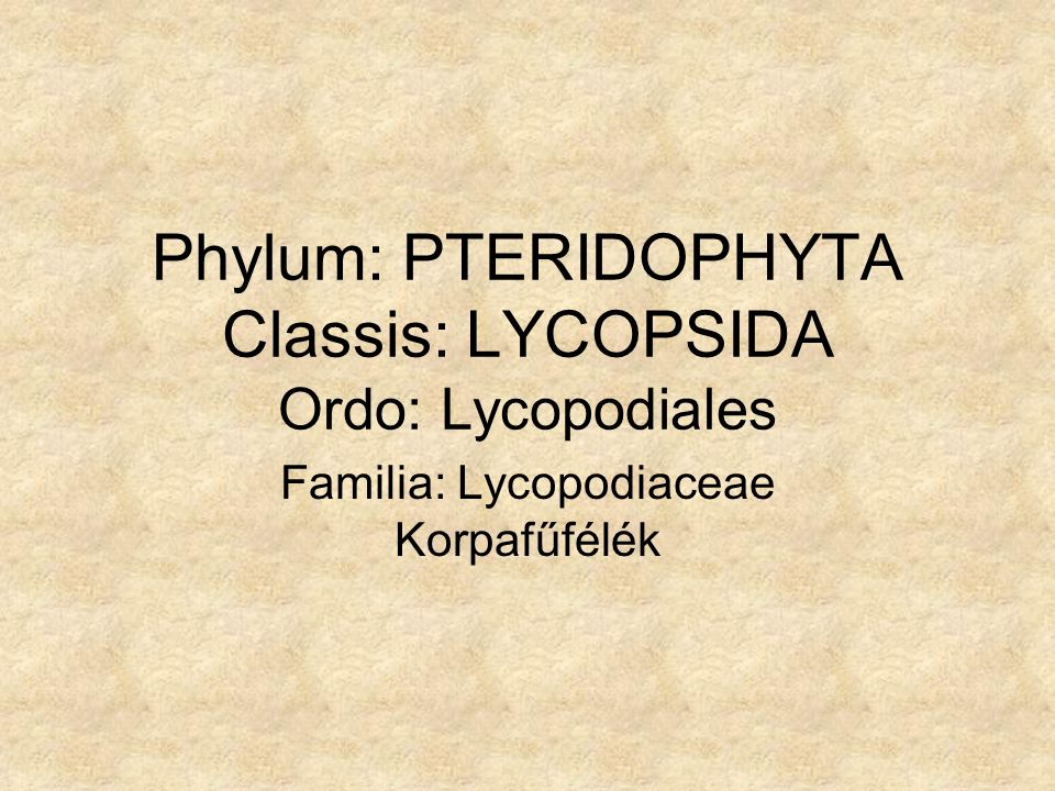 Phylum: PTERIDOPHYTA Classis: LYCOPSIDA Ordo: Lycopodiales Familia: Lycopodiaceae Korpafűfélék