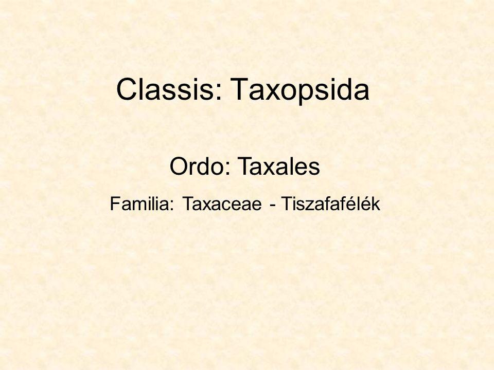 Classis: Taxopsida Ordo: Taxales Familia: Taxaceae - Tiszafafélék