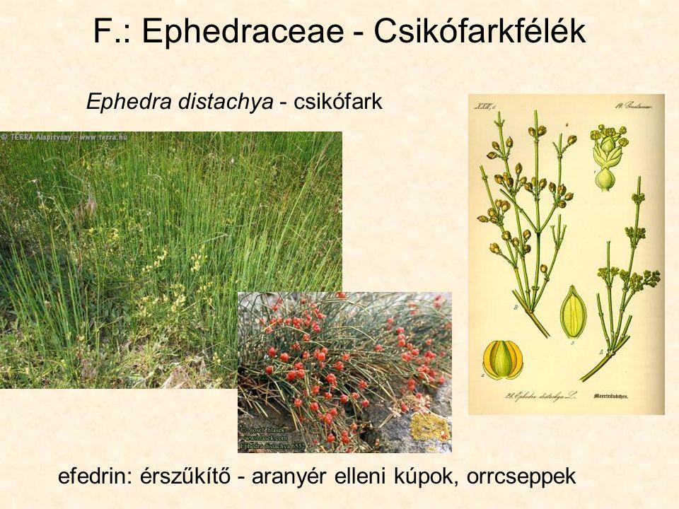 Ephedra distachya - csikófark efedrin: érszűkítő - aranyér elleni kúpok, orrcseppek