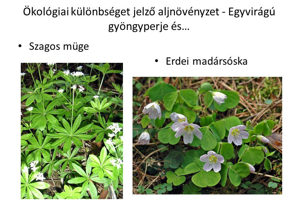 Ökológiai különbséget jelző aljnövényzet - Egyvirágú gyöngyperje és… Szagos müge Erdei madársóska