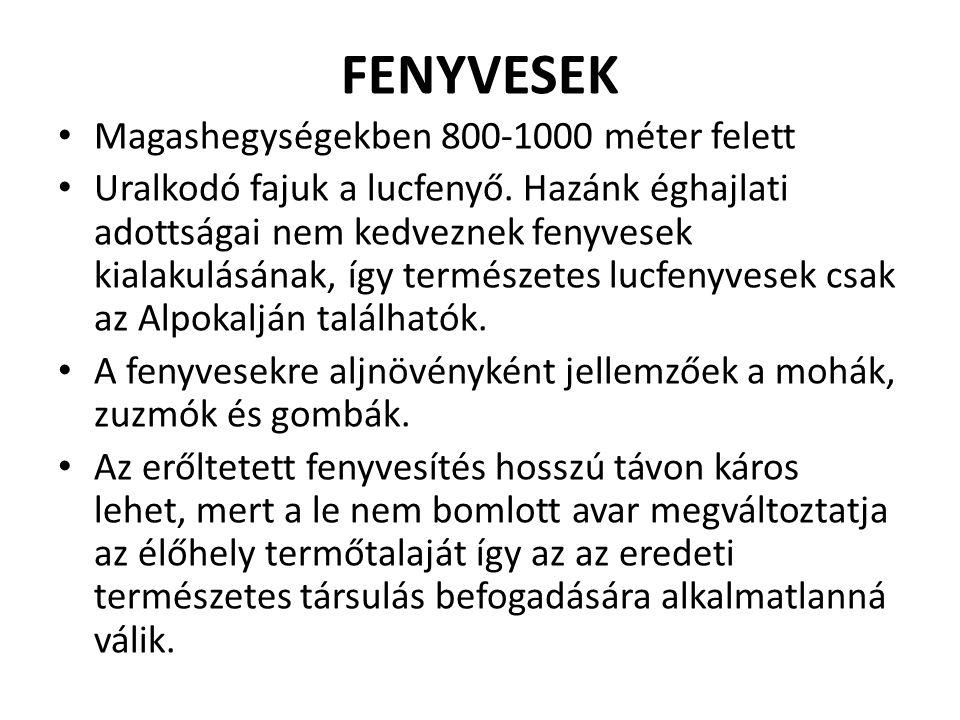 FENYVESEK Magashegységekben 800-1000 méter felett Uralkodó fajuk a lucfenyő.