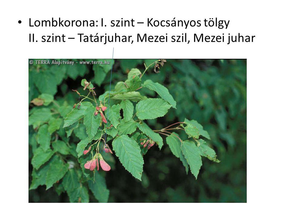 Lombkorona: I. szint – Kocsányos tölgy II. szint – Tatárjuhar, Mezei szil, Mezei juhar