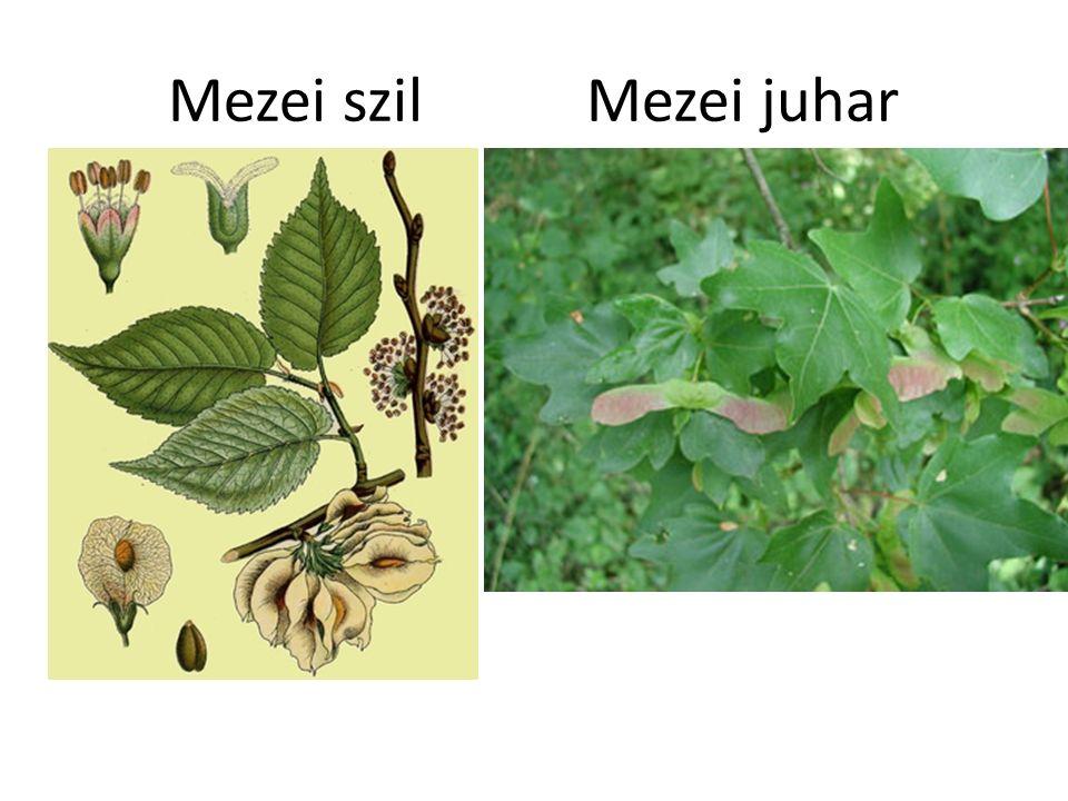Sztyepp Szárazságtűrő, keskenylevelű fűfélék, ezek közül is az árvalányhajak.