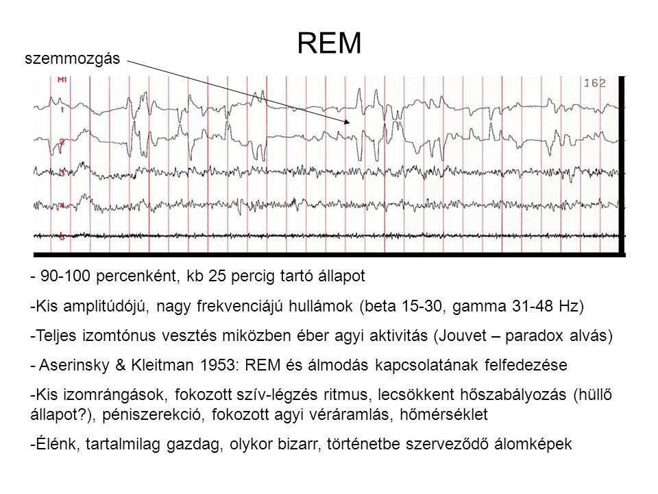 REM szemmozgás - 90-100 percenként, kb 25 percig tartó állapot -Kis amplitúdójú, nagy frekvenciájú hullámok (beta 15-30, gamma 31-48 Hz) -Teljes izomt
