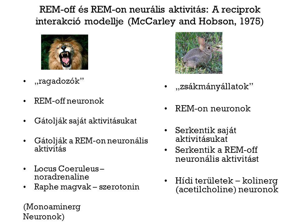 """REM-off és REM-on neurális aktivitás: A reciprok interakció modellje (McCarley and Hobson, 1975) """"ragadozók"""" REM-off neuronok Gátolják saját aktivitás"""