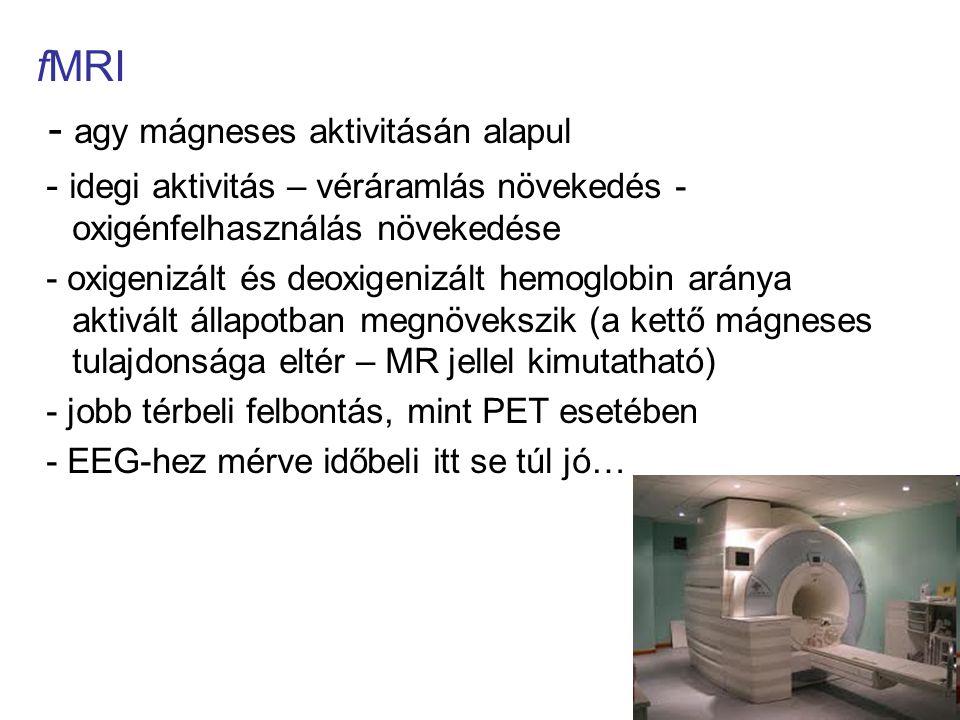 fMRI - agy mágneses aktivitásán alapul - idegi aktivitás – véráramlás növekedés - oxigénfelhasználás növekedése - oxigenizált és deoxigenizált hemoglo