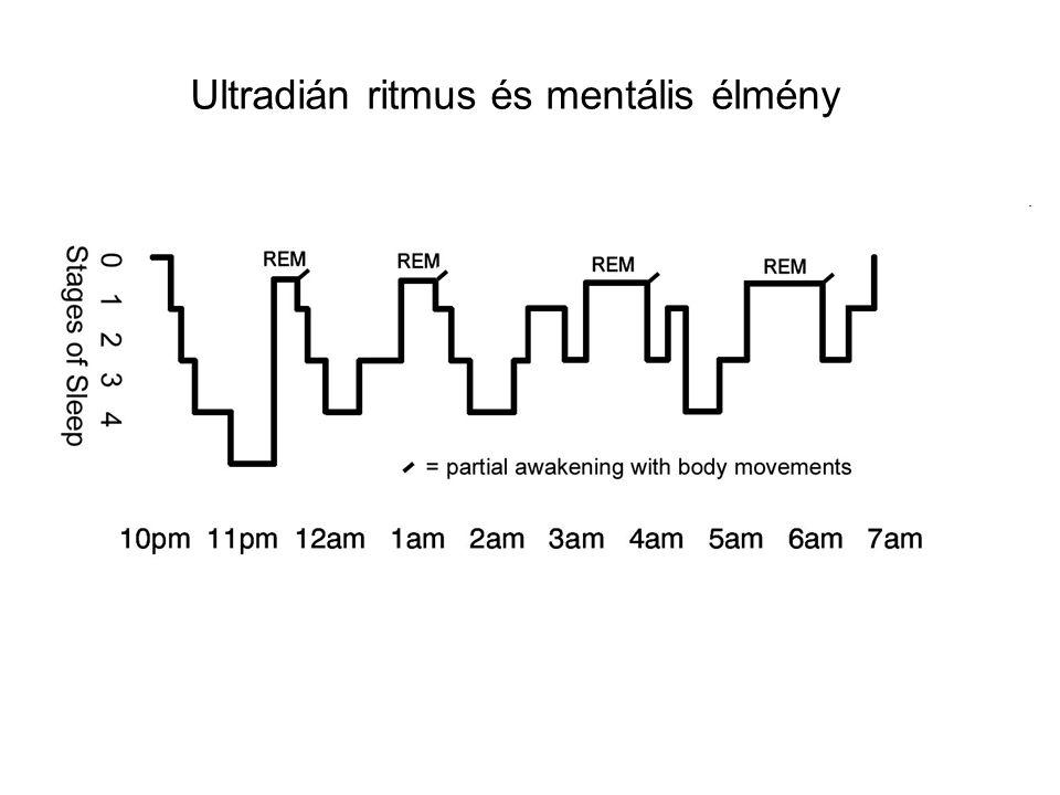 Ultradián ritmus és mentális élmény