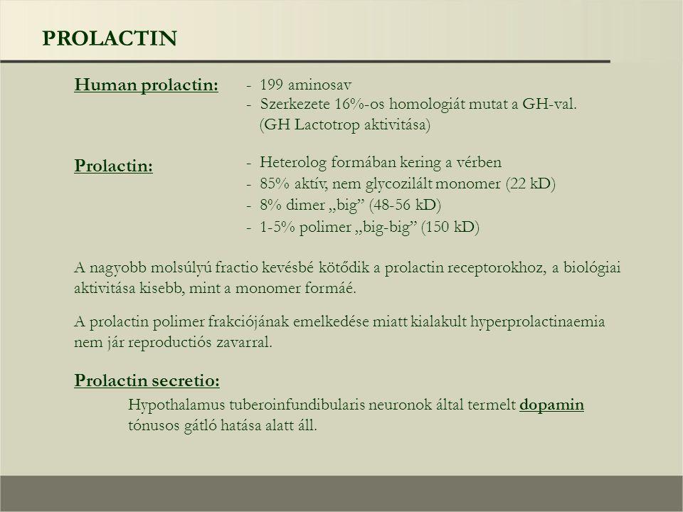 PROLACTIN Human prolactin: - 199 aminosav - Szerkezete 16%-os homologiát mutat a GH-val.
