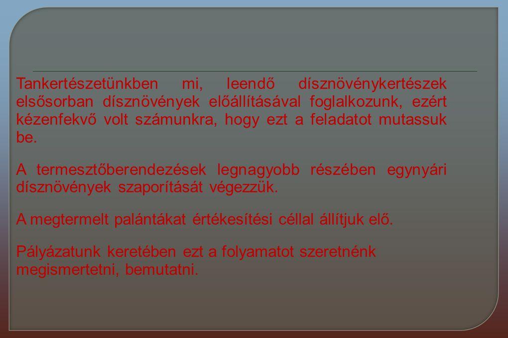 Bolgár János Farkas Gabriella Müller Dávid Orosz Máté 