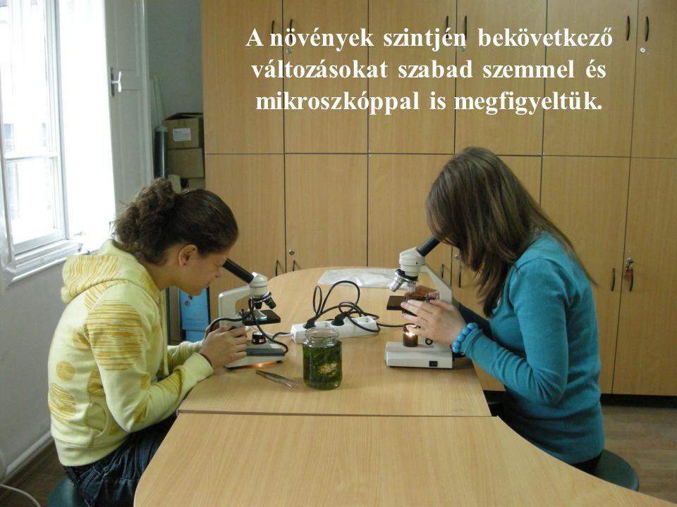 A növények szintjén bekövetkező változásokat szabad szemmel és mikroszkóppal is megfigyeltük.