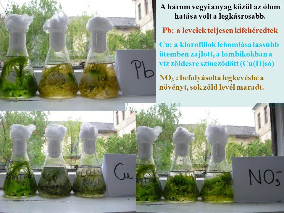 A három vegyi anyag közül az ólom hatása volt a legkásrosabb. Pb: a levelek teljesen kifehéredtek Cu: a klorofillok lebomlása lassúbb ütemben zajlott,